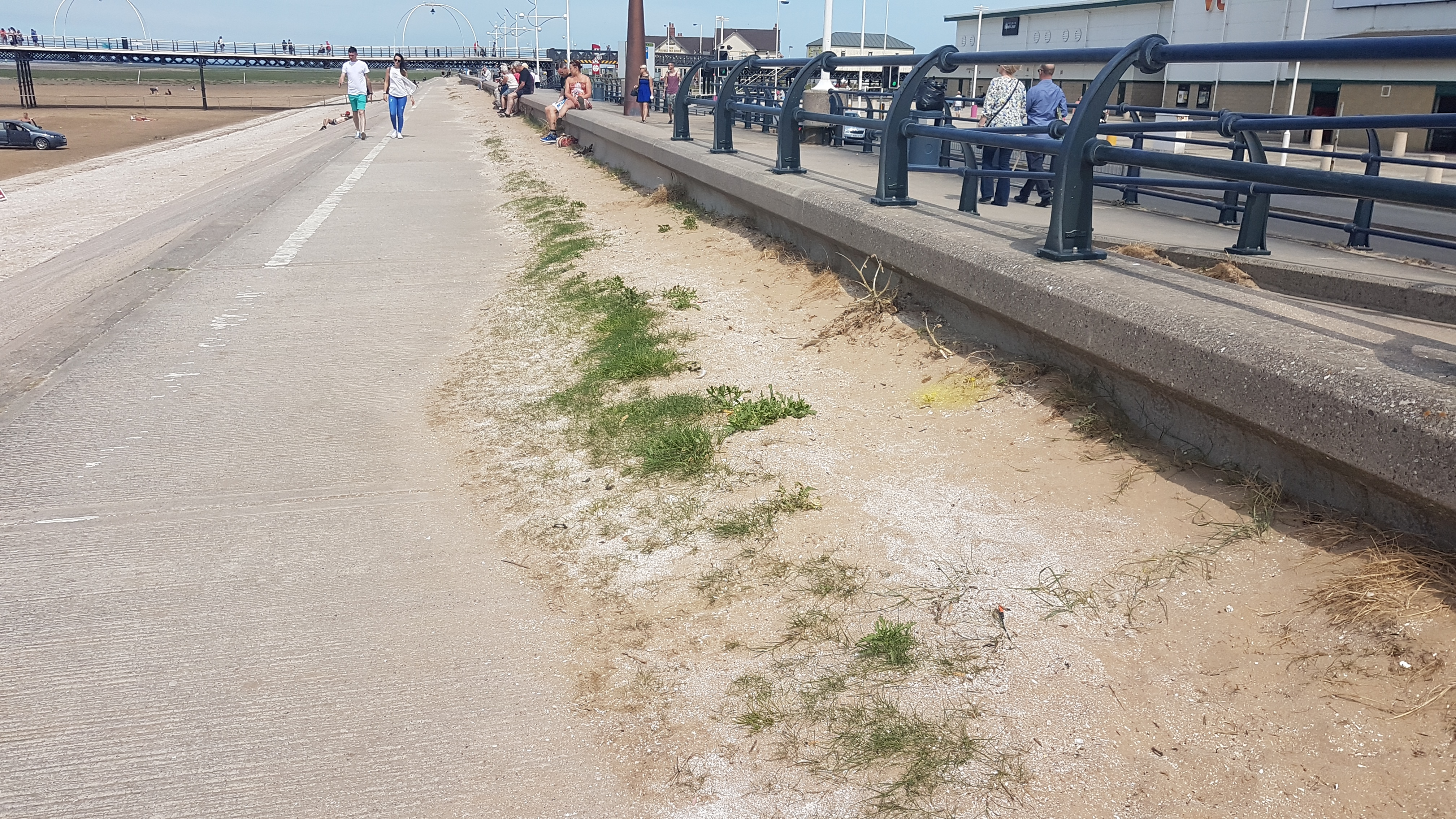 With the holiday season in full swing and the sun beating down the amount of sand on the sea wall is a disgrace.    Its so long since some of the sand was moved that grass is now growing out of it.    Cyclists and pedestrians are having to avoid each other due to the lack of space.    Just another...