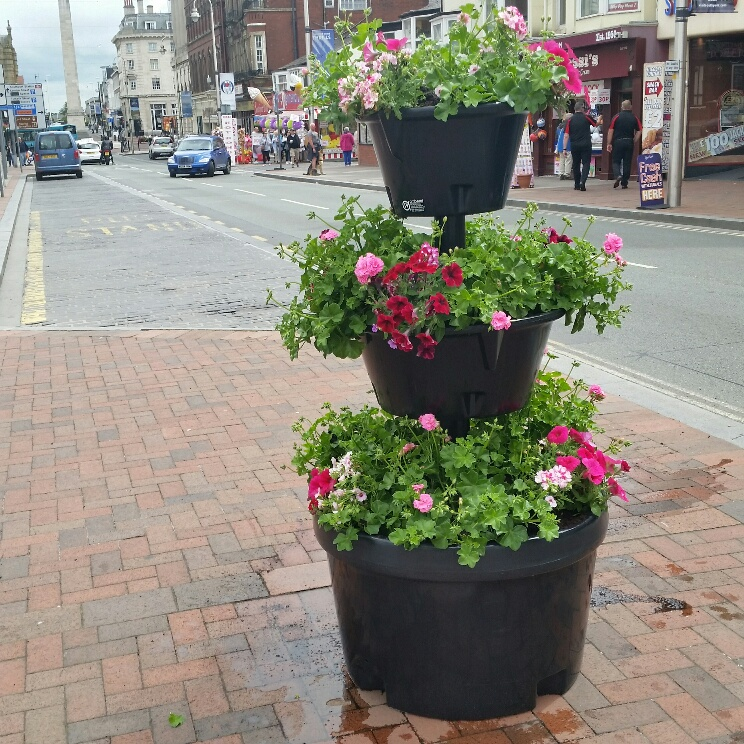Floral Planters have now been installed at the corner of Nevill Street and Bath Street, Southport and have been planted up by the local Hoteliers Association and